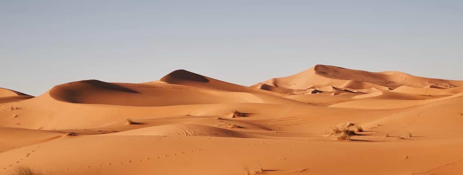 Sahara Store Norske Leksikon