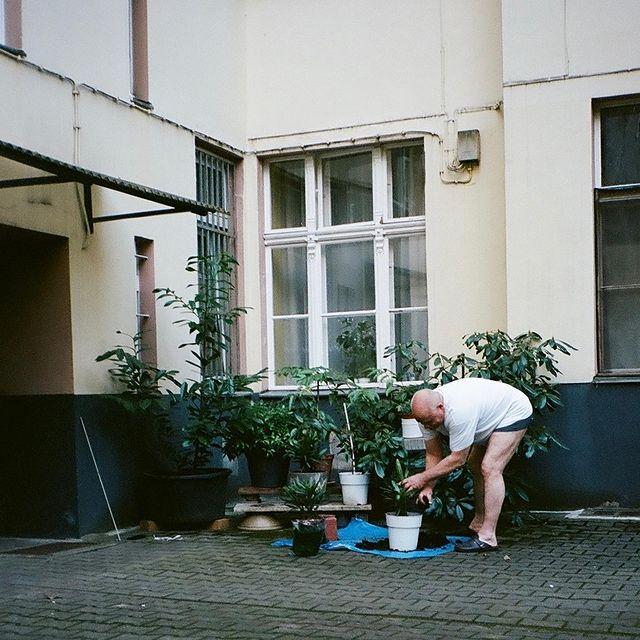 "april 2021, Neuköln ""lockdown gardening"""