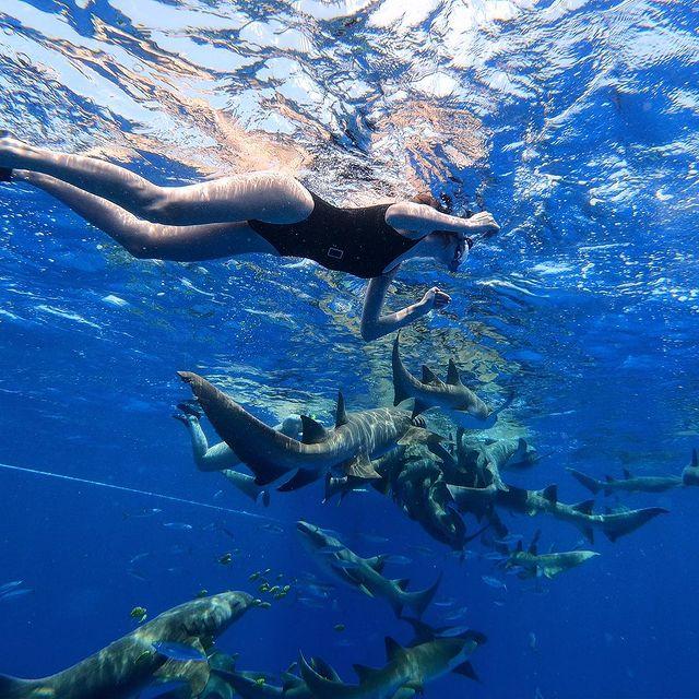 🦈🌊 #sharks#indianocean#maldives
