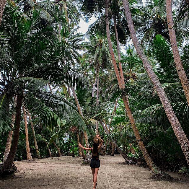 Into the Jungle🌴 #jungle#palms#sand#maldives#island#ocean