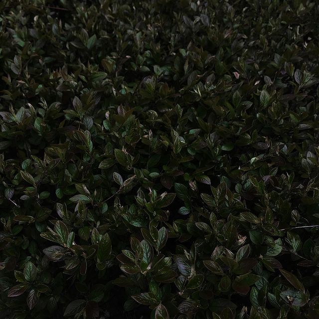 Shades of green 🖤  #postitfortheaesthetic #neutralstyle #darkfeed #neutralpalette #inspiration #ootd #beigeaesthetic #photography #minimalism #moodboard #inspiration #simplefits #mybeigelife #neutrals #darkmood #mood #riga #latvia #rigacity #minimalistfeed