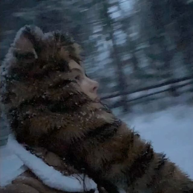Flying through Narnia. ❄️