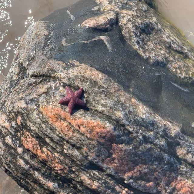 a friend I found near the Baltic Sea