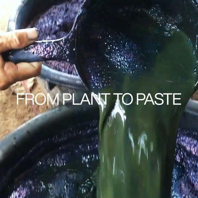 From indigofera tinctoria plant to indigo paste.   #indigoworld #process #planttopaste #artisanalfuture #philiphuangnyc