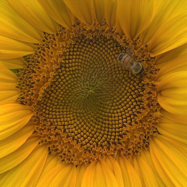 bees doing bee stuff 🐝✨🧡