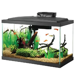 Aqueon 10 Gal LED Aquarium Kit  - Best Tank for a Turtle: Small but works like a charm