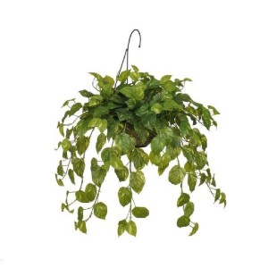 House of Silk Flowers Real Touch Pothos - Best Artificial Hanging Plants: Only Recommended for Indoor Use
