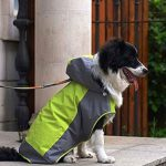 10 Reviews: Best Raincoats for Dogs (Oct  2020): Raincoat with 2 Layers Design