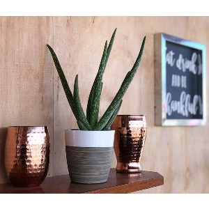 Costa Farms Aloe Vera Live Indoor House Plant - Best Air Purifier Plants Indoor: Easy-To-Grow Plant