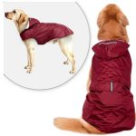 10 Reviews: Best Raincoats for Dogs (Oct  2020): Raincoat with Vest Design