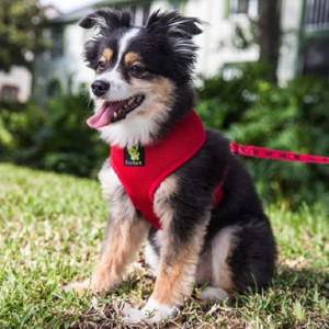 EcoBark Dog Harness Soft Gentle  - Best Dog Harness for Walking: Breathable Mesh Fabric