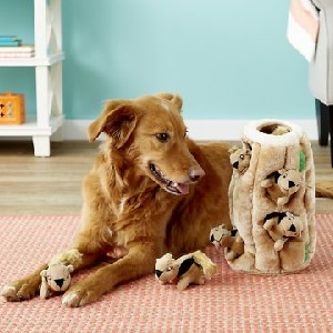 Outward Hound Hide A Squirrel Squeaky Puzzle Plush Dog Toy - Best Dog Toys to Keep Them Busy: Hide-And-Seek Plush Toy