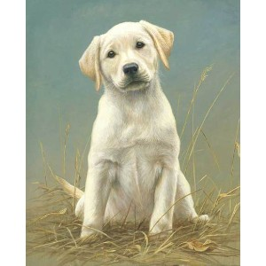 Masterpiece by Numbers Puppy Power - Best Paint by Number Kits for Beginners: Adorable Dog