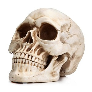 READAEER Life Size Human Skull Model - Best Halloween Decorations Outdoor: Easy to modify
