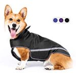 10 Reviews: Best Raincoats for Corgis (Oct  2020): High visibility for safety