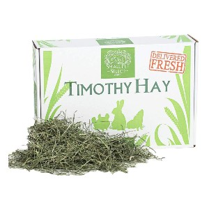 Small Pet Select Cutting Perfect Blend Timothy Hay Pet Food - Best Rabbit Food for Holland Lops: Tasty Strands Food