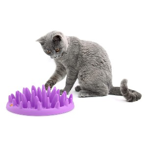 The Company of Animals CATCH Interactive Feeder - Best Cat Puzzle Toys: Excellent Feeder Toy