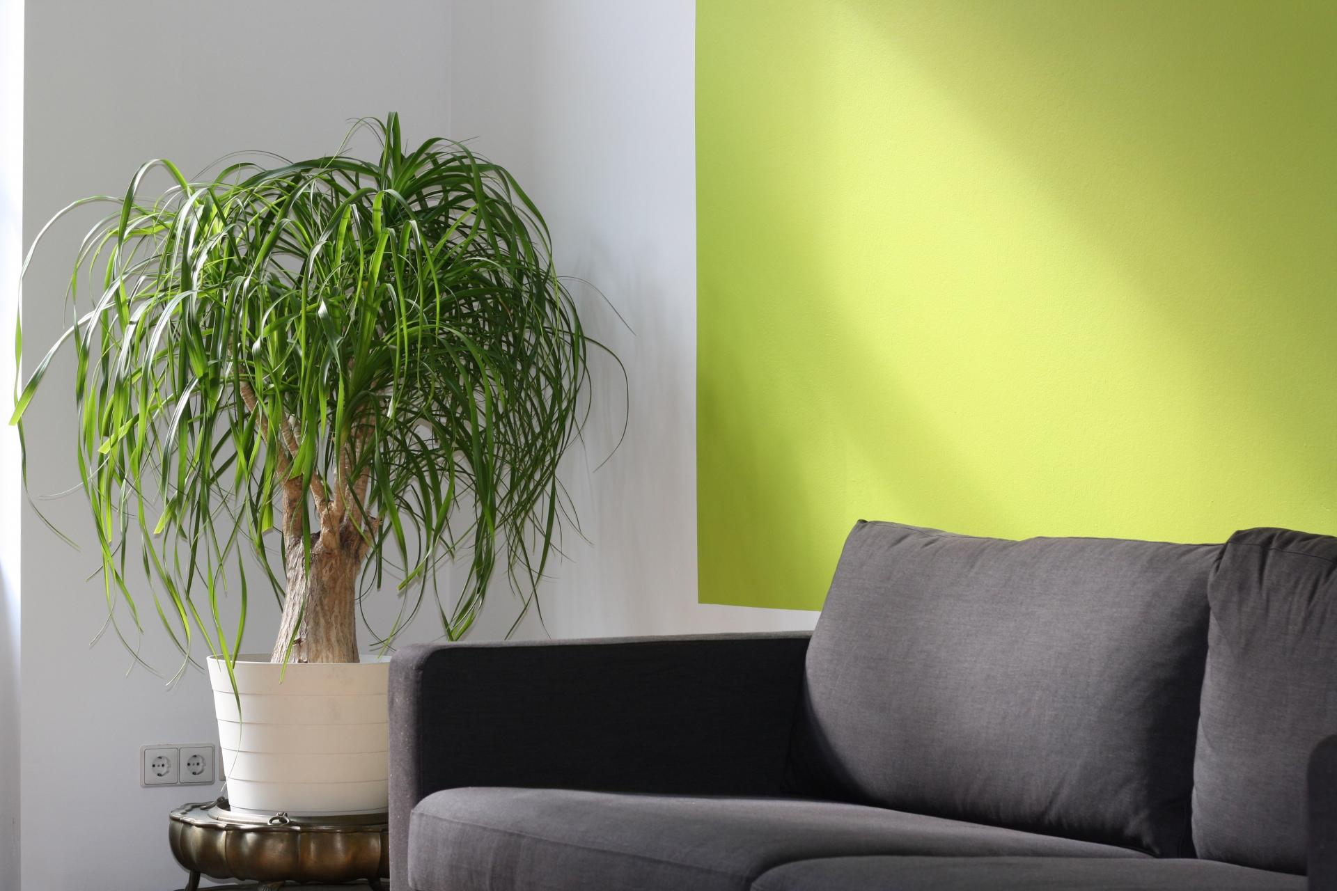 How to improve indoor air quality