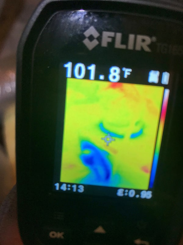 High Humidity and Mold Thermal Image