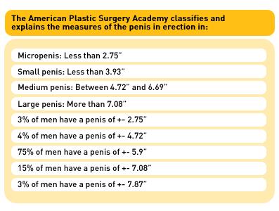 Average erect penis size