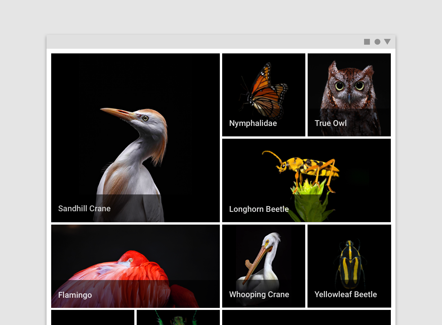 Image lists - Material Design