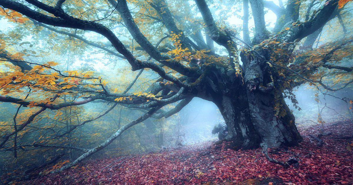 A grassy labyrinth