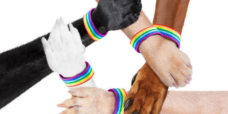 Diverse Animal Pride paws shaking