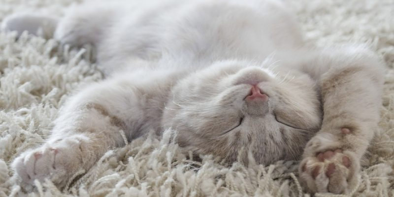 Cat asleep on a rug