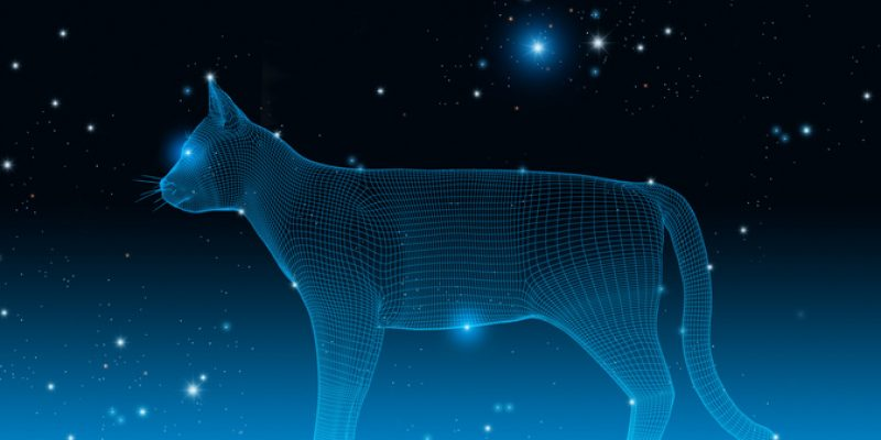 A cat in the stars illustrates the concept of catstrology.
