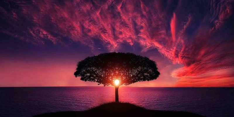 Colorful image of tree and sunset