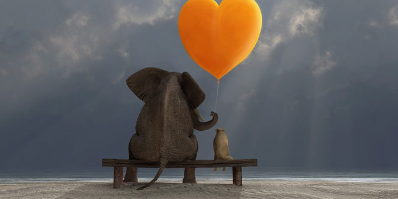 Elephant and cat sitting on a bench in the rain