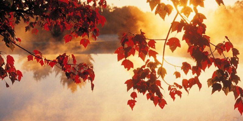 Red fall leaves and lake