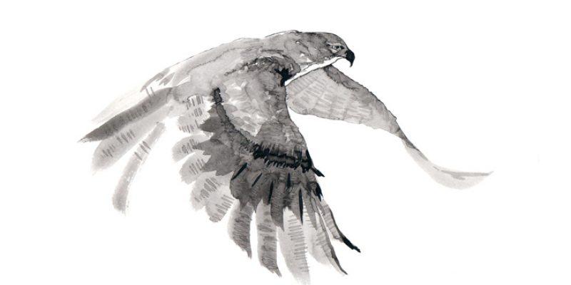 Illustration of falcon flying