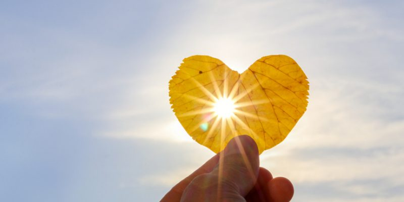 Sun shines through a heart-shaped leaf