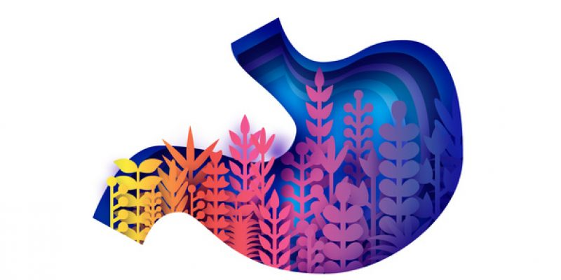 Colorful illustration of stomach organ, with plants growing inside to symbolize gut health