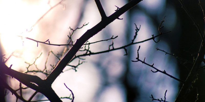 Light coming through dark woods scene