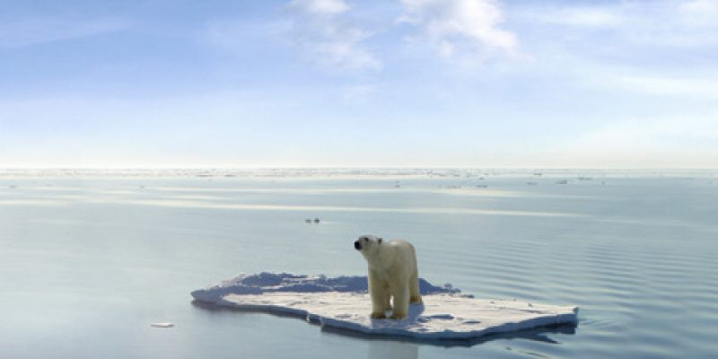 a polar bear alone on an ice floe