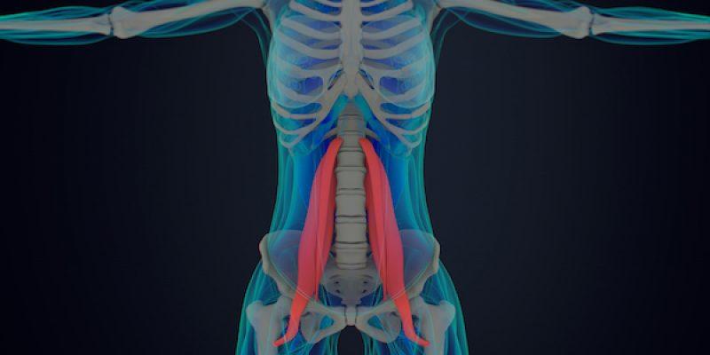 psoas in human anatomy