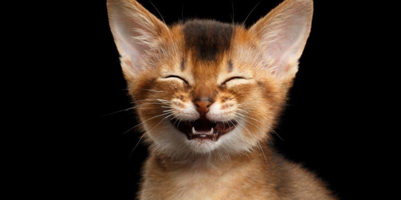 Cat smiling ear to ear