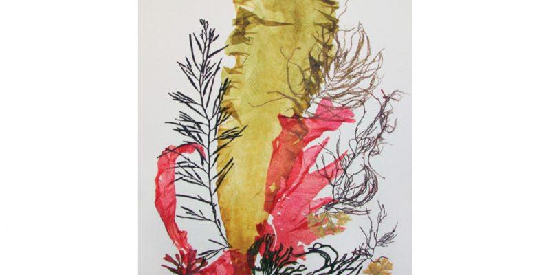 Sugar Kelp Pressing