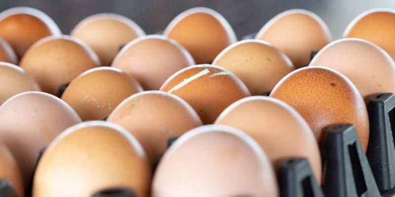 eggs in large packaging