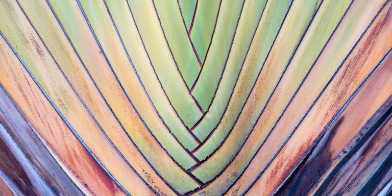 Palm fran