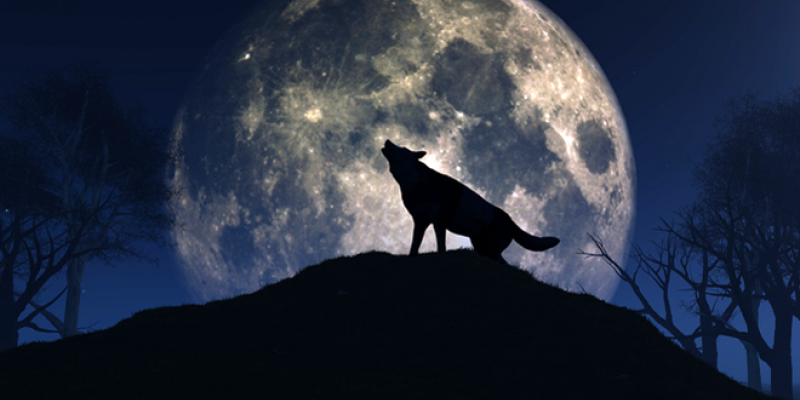 Wolf howling at full mon
