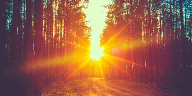 Bright sun coming through forest