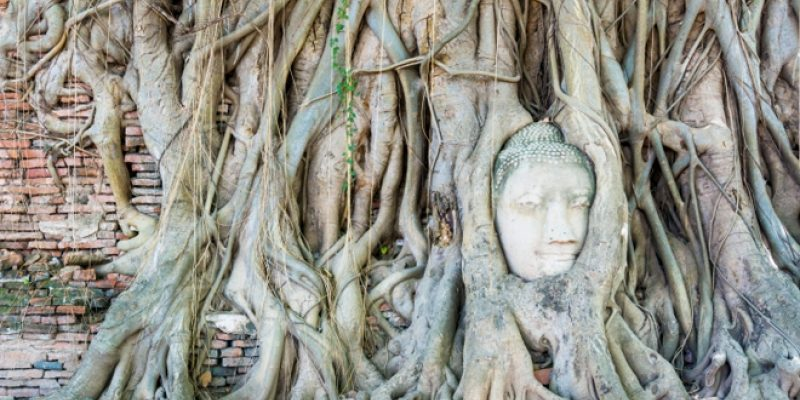 <em>Edit Article</em> People and Trees: Intimately Connected Through the Ages