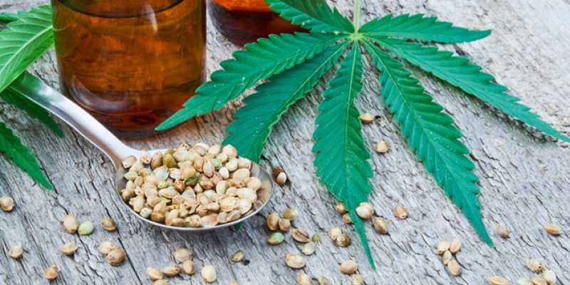 cbd oil, hemp leaves