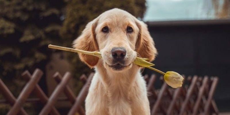 dog with flower in mouth affirmations for surrender and trust