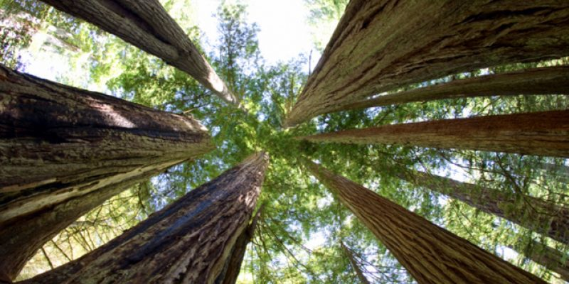 <em>Edit Article</em> Gifts from Trees