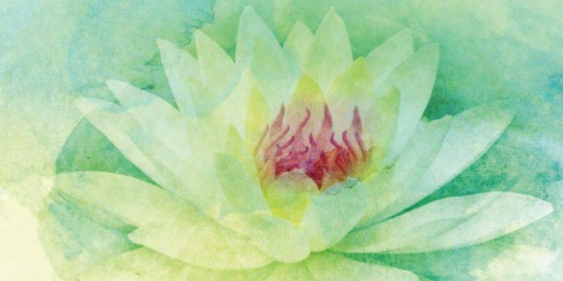 watercolor lotus flower graphic