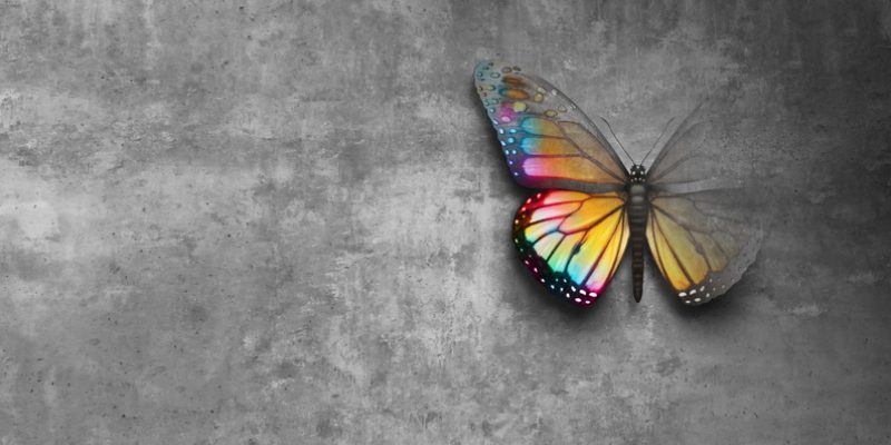 butterfly coming into focus gradually, concept of hope and positive feelings and optimistic emotions.